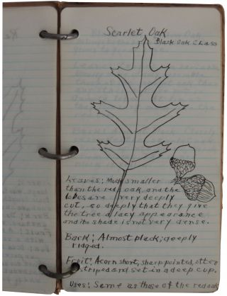 Illustrated Vernacular Book on Trees